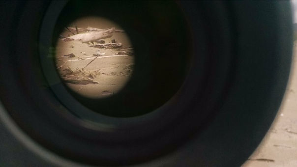 What I saw on most nest checks - through the lens of a spotting scope.