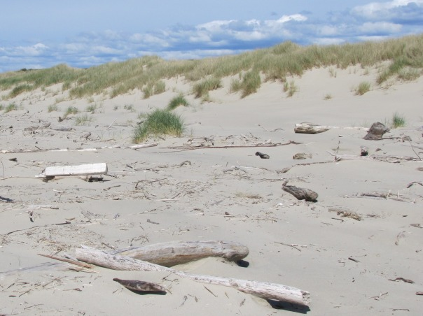Taken April 9, the nest was in between the long, flat-topped board on the left and the tuft of beach grass.